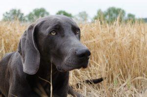 Hundesteuer gekippt (casc/pixabay)